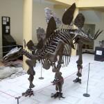 interior_museu
